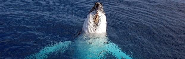 Whale Videos