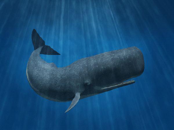 Big Sperm Whale Illustration