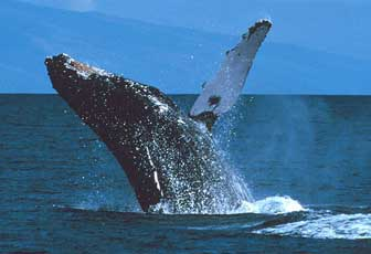 facts about whales