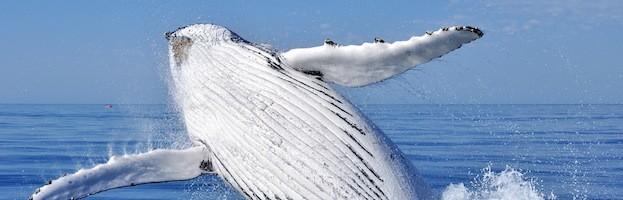 Investigaciones Sobre Ballenas