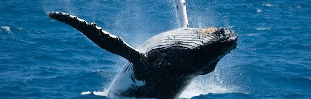 Ballenas y Greenpeace