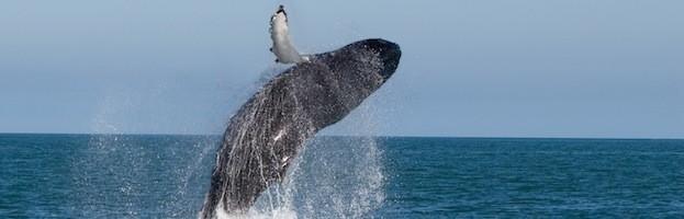 Whale Habitat