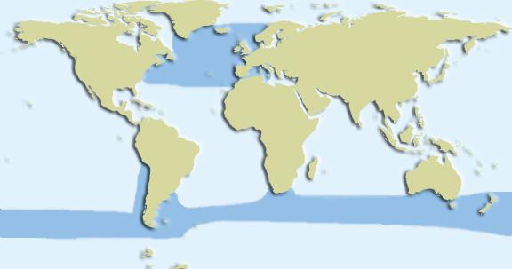 long finned whale habitat