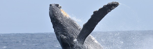 Whale Social Structure