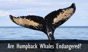 whale-faqs