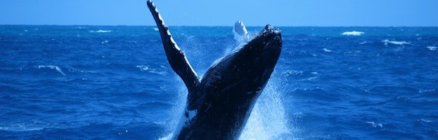 Whales in History