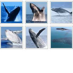 whale-pictures-squares