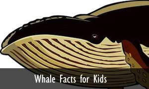 whales-facts-kids